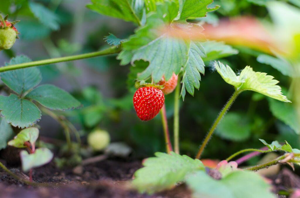 Planter er ikke kun smukke at omgive sig med - de kan også spises! Praktisk ikke?